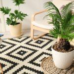 Les meilleurs palmiers d'intérieur pour décorer une maison