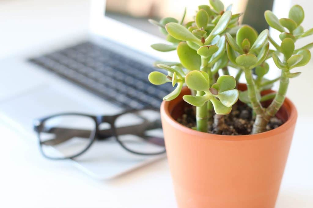 Ajouter des plantes